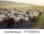Flock Of Sheep Grazing At...