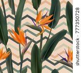 strelitzia reginae blossom or... | Shutterstock .eps vector #777350728