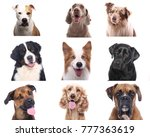 group of dogs | Shutterstock . vector #777363619