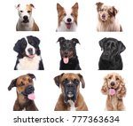 group of dogs | Shutterstock . vector #777363634
