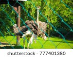 birds living in the zoo | Shutterstock . vector #777401380