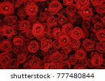 Small photo of Flower wall, natural red roses background.
