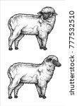 vector illustration of animal... | Shutterstock .eps vector #777532510