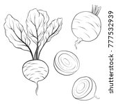 vector drawing beets  isolated... | Shutterstock .eps vector #777532939