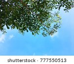 View Under Tree To Sky