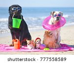 group of dogs sitting on the... | Shutterstock . vector #777558589