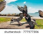 Flock Pigeon Concept Feral Pigeon - Fine Art prints