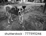 Small photo of Slumdog in Kathmandu