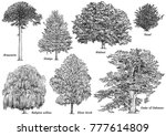 tree collection illustration ... | Shutterstock .eps vector #777614809