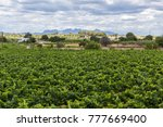 lanscape with vineyards penedes ...   Shutterstock . vector #777669400