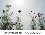beautiful cosmos and the sky | Shutterstock . vector #777700720