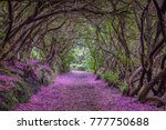 the tunnel of love   Shutterstock . vector #777750688