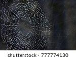 spider web in rain | Shutterstock . vector #777774130