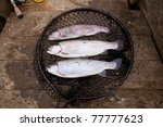 Three rainbow trout in a landing net. Essex England, United Kingdom. - stock photo