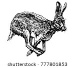Stock vector frightened hare running vector ink illustration black and white jackrabbit image 777801853