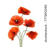 five red poppies isolated on... | Shutterstock . vector #777892090