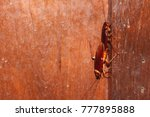mating of cockroach on the... | Shutterstock . vector #777895888