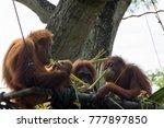 horizontal full length photo of ... | Shutterstock . vector #777897850