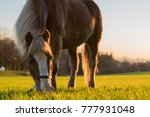 Horse Standing On A  Pasture...