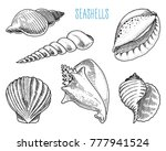 seashells or mollusca different ... | Shutterstock .eps vector #777941524