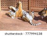 tiger in cabarceno natural park ... | Shutterstock . vector #777994138