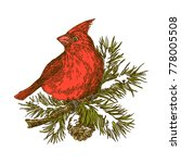 red cardinal bird sitting on... | Shutterstock .eps vector #778005508