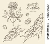collectuon of ginseng  ginseng... | Shutterstock .eps vector #778006030
