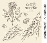 collectuon of ginseng  ginseng... | Shutterstock .eps vector #778006030