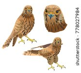 birds of prey set. vector... | Shutterstock .eps vector #778027984