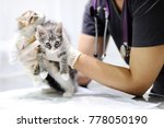 young female veterinary doctor... | Shutterstock . vector #778050190