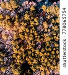Small photo of Trees losing color at Stumpy Lake in Virginia Beach, Virginia