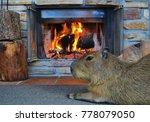 capybara by the fire   Shutterstock . vector #778079050