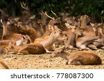 Small photo of hordes of deer