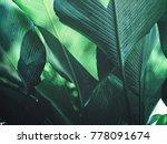 beautiful of green tropical...   Shutterstock . vector #778091674