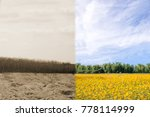 ecology concept tree forest... | Shutterstock . vector #778114999