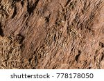 giant sequoia tree bark