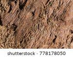 giant sequoia tree bark