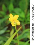 yellow flower on blurred... | Shutterstock . vector #778199260