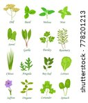 popular culinary herbs... | Shutterstock .eps vector #778201213
