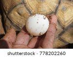 hand of a man holding fresh... | Shutterstock . vector #778202260