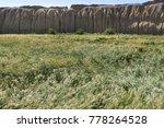 wind on wheat field inside... | Shutterstock . vector #778264528
