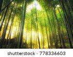 Abstract Tree Nature Backgroun...