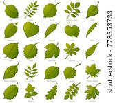set of green leaves of various... | Shutterstock .eps vector #778353733