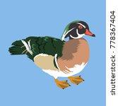Wood Duck Vector Illustration