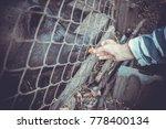 feeding vietnamese pigs and... | Shutterstock . vector #778400134