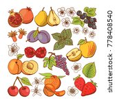 set of colored berry and fruit... | Shutterstock . vector #778408540