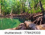 ecosystem mangrove tropical... | Shutterstock . vector #778429333