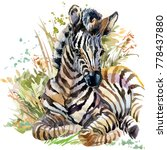 zebra cub. wild animals... | Shutterstock . vector #778437880