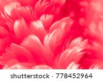 Small photo of Abstract feathers closeup background image of Red Berry colour with Petunia Fuchsia tint from new Fashion Color Trends: Fall Winter 2018 - 2019. Amors white angel wings macro on pastel ruby wallpaper.