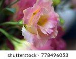 pink beautiful eustoma flowers  ...   Shutterstock . vector #778496053